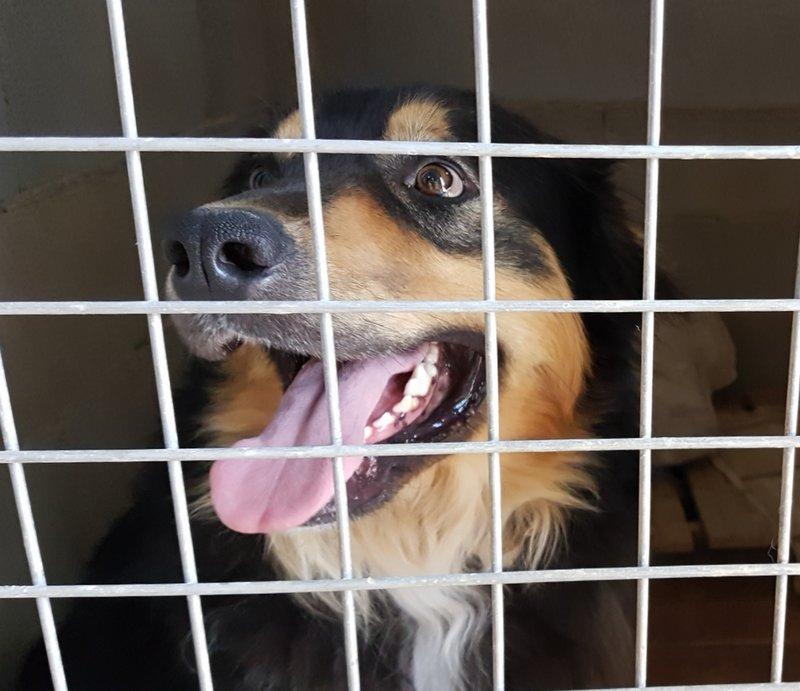 Bildertagebuch  - Ben: ein echter Hundekumpel - VERMITTELT - 33157695ep