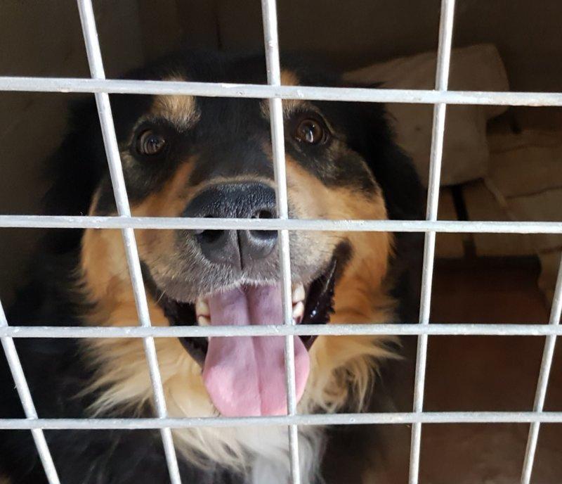 Bildertagebuch  - Ben: ein echter Hundekumpel - VERMITTELT - 33157697qv