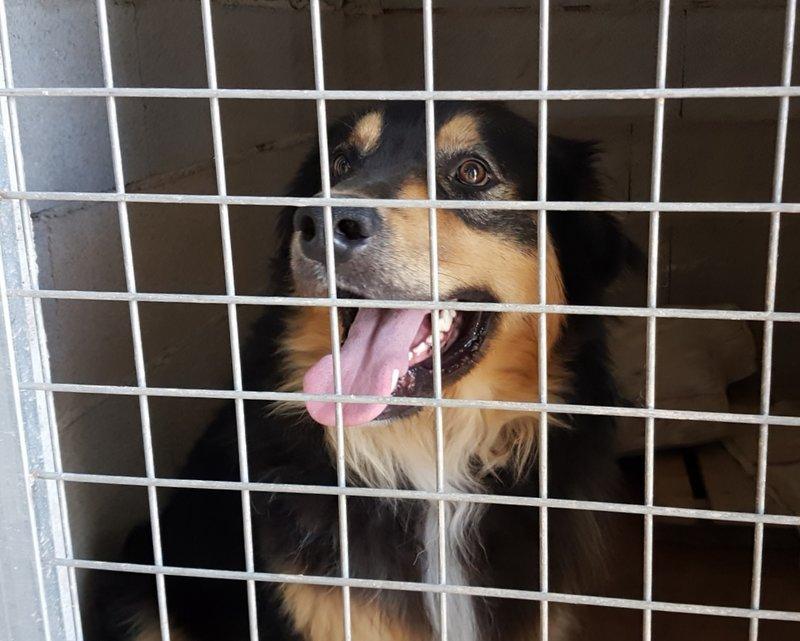 Bildertagebuch  - Ben: ein echter Hundekumpel - VERMITTELT - 33157700yh