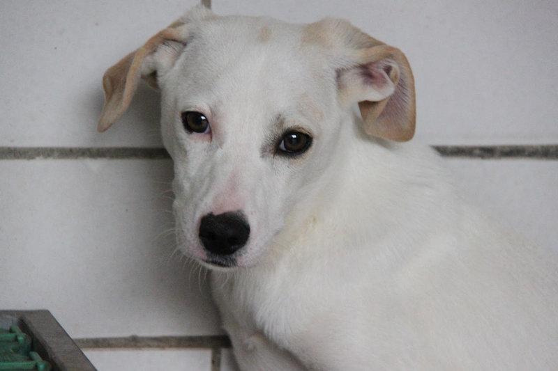 Bildertagebuch - Bianchina lebte mit ihrer Mutter und 8 anderen Hunden völlig isoliert - VERMITTELT - 33318206ls
