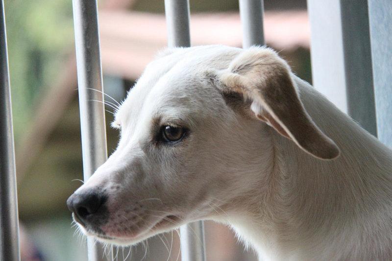 Bildertagebuch - Bianchina lebte mit ihrer Mutter und 8 anderen Hunden völlig isoliert - VERMITTELT - 33318208sw