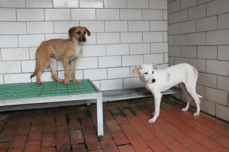 Bildertagebuch - Bianchina lebte mit ihrer Mutter und 8 anderen Hunden völlig isoliert - VERMITTELT - 33318209qf