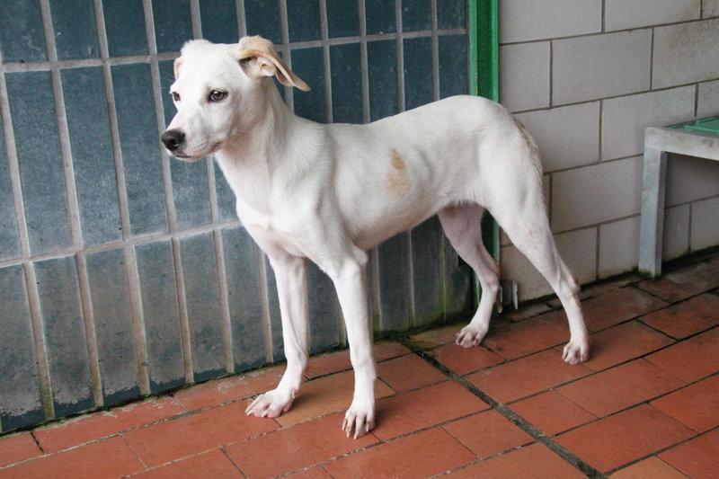 Bildertagebuch - Bianchina lebte mit ihrer Mutter und 8 anderen Hunden völlig isoliert - VERMITTELT - 33318210cp