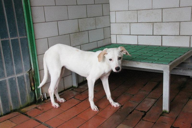Bildertagebuch - Bianchina lebte mit ihrer Mutter und 8 anderen Hunden völlig isoliert - VERMITTELT - 33318211ms