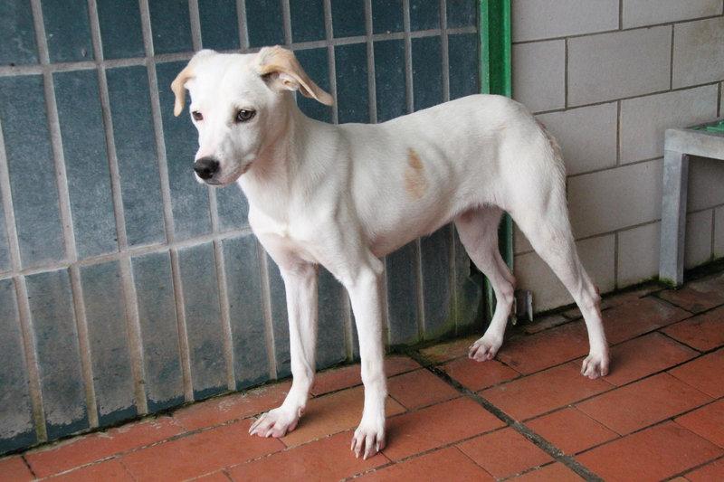 Bildertagebuch - Bianchina lebte mit ihrer Mutter und 8 anderen Hunden völlig isoliert - VERMITTELT - 33318213qq