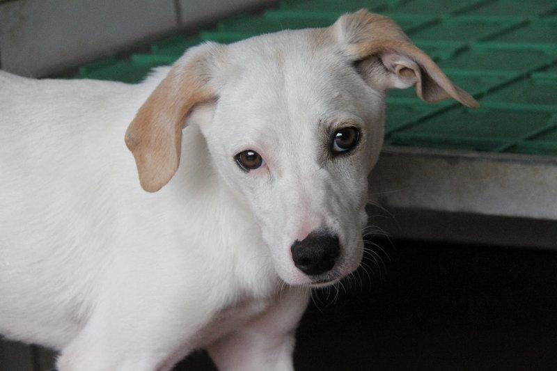 Bildertagebuch - Bianchina lebte mit ihrer Mutter und 8 anderen Hunden völlig isoliert - VERMITTELT - 33318214el
