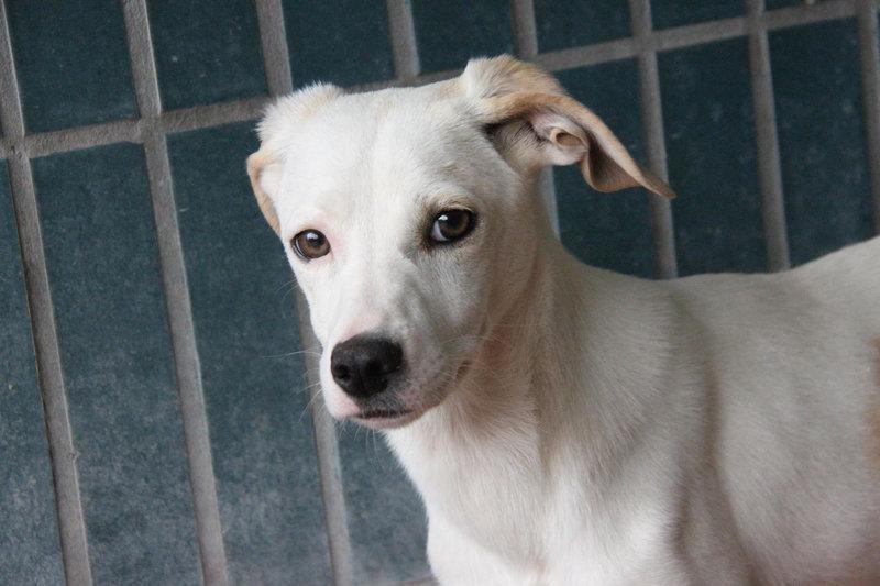 Bildertagebuch - Bianchina lebte mit ihrer Mutter und 8 anderen Hunden völlig isoliert - VERMITTELT - 33318215fj