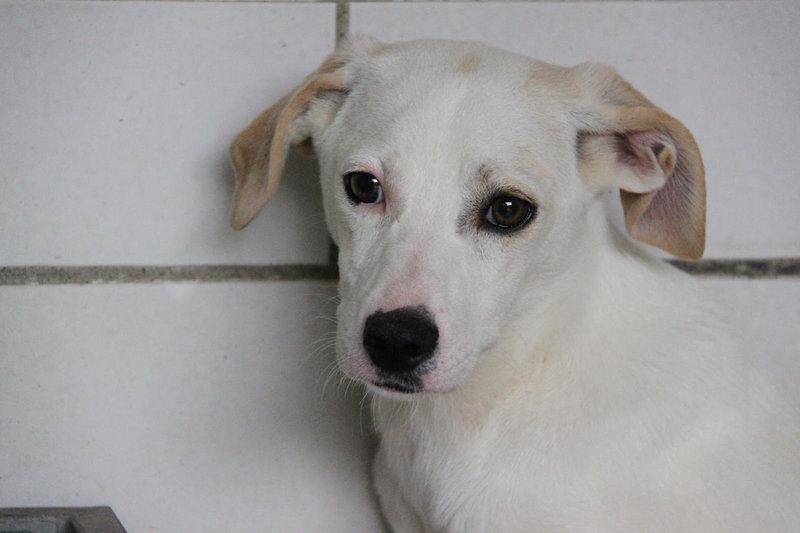 Bildertagebuch - Bianchina lebte mit ihrer Mutter und 8 anderen Hunden völlig isoliert - VERMITTELT - 33318216tp