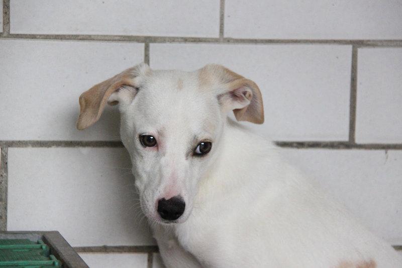 Bildertagebuch - Bianchina lebte mit ihrer Mutter und 8 anderen Hunden völlig isoliert - VERMITTELT - 33318217mk