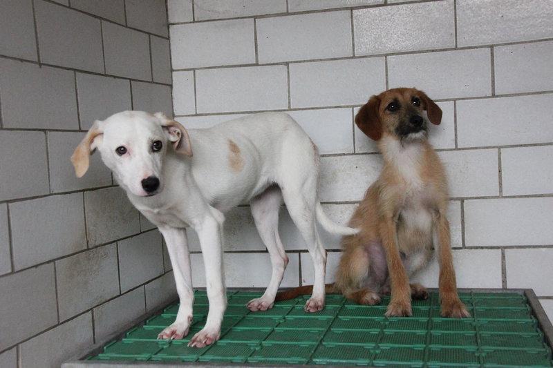 Bildertagebuch - Bianchina lebte mit ihrer Mutter und 8 anderen Hunden völlig isoliert - VERMITTELT - 33318218dy