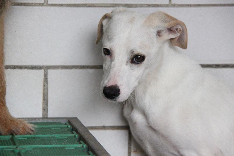 Bildertagebuch - Bianchina lebte mit ihrer Mutter und 8 anderen Hunden völlig isoliert - VERMITTELT - 33318219gt