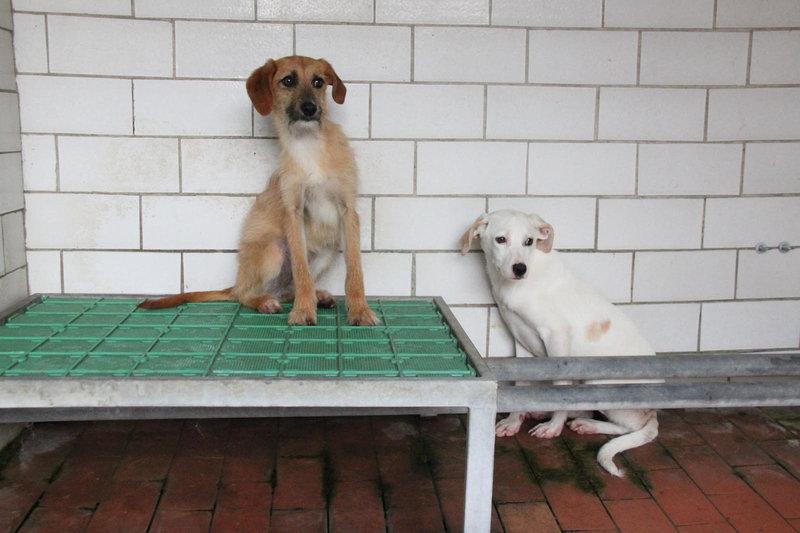 Bildertagebuch - Bianchina lebte mit ihrer Mutter und 8 anderen Hunden völlig isoliert - VERMITTELT - 33318220oo