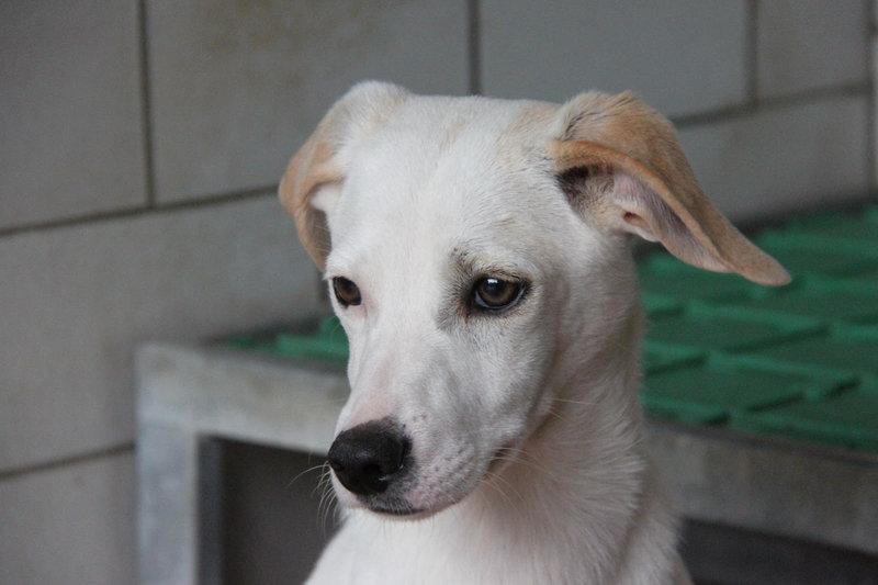 Bildertagebuch - Bianchina lebte mit ihrer Mutter und 8 anderen Hunden völlig isoliert - VERMITTELT - 33318221aa
