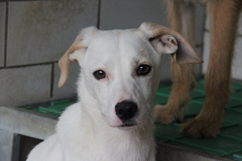 Bildertagebuch - Bianchina lebte mit ihrer Mutter und 8 anderen Hunden völlig isoliert - VERMITTELT - 33318222fn