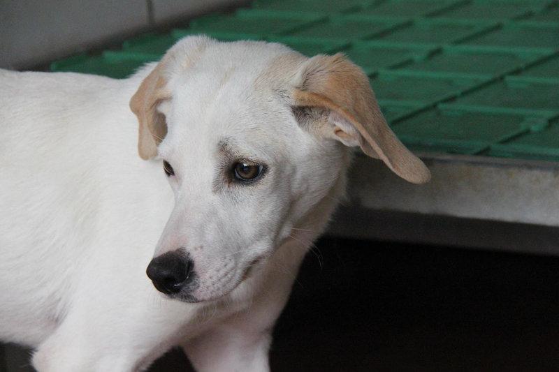 Bildertagebuch - Bianchina lebte mit ihrer Mutter und 8 anderen Hunden völlig isoliert - VERMITTELT - 33318223tn