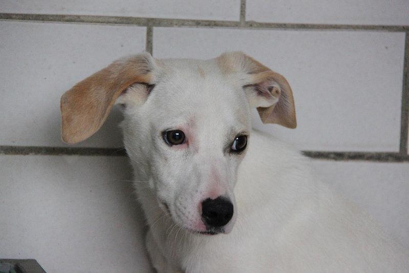 Bildertagebuch - Bianchina lebte mit ihrer Mutter und 8 anderen Hunden völlig isoliert - VERMITTELT - 33318225qv