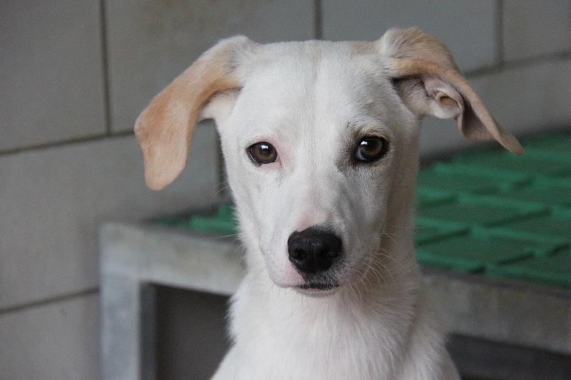 Bildertagebuch - Bianchina lebte mit ihrer Mutter und 8 anderen Hunden völlig isoliert - VERMITTELT - 33318226jy