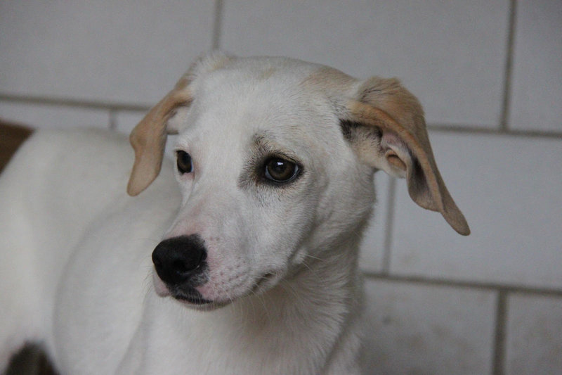 Bildertagebuch - Bianchina lebte mit ihrer Mutter und 8 anderen Hunden völlig isoliert - VERMITTELT - 33318227ao