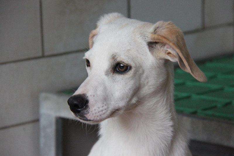 Bildertagebuch - Bianchina lebte mit ihrer Mutter und 8 anderen Hunden völlig isoliert - VERMITTELT - 33318228td