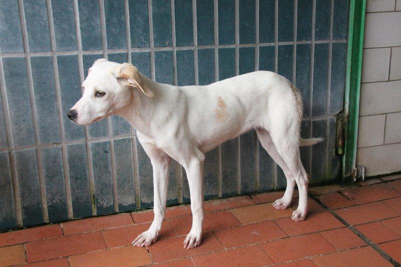 Bildertagebuch - Bianchina lebte mit ihrer Mutter und 8 anderen Hunden völlig isoliert - VERMITTELT - 33318229gw