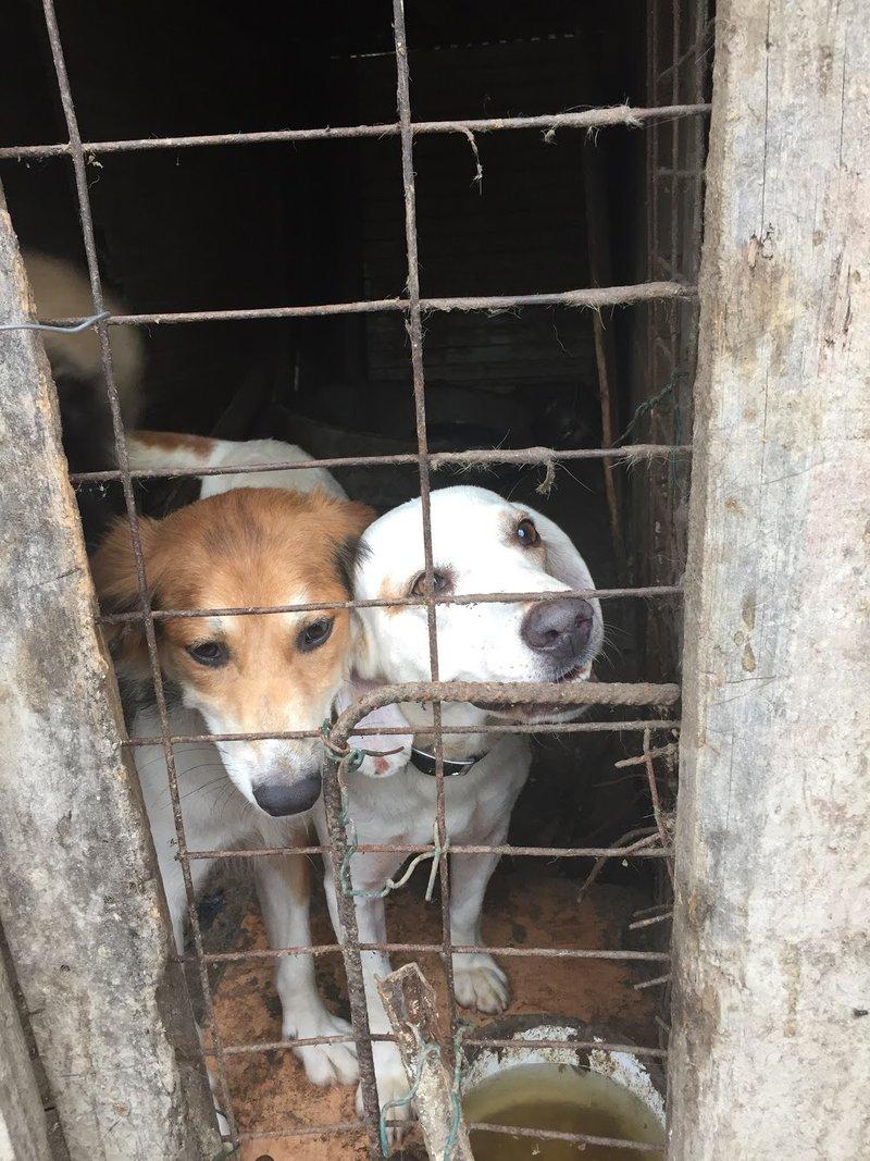 Bildertagebuch - Cuqui hat fast sein ganzes Leben im Hundelager verbracht und ist trotzdem ein freundlicher Hund...VERMITTELT! 33343658su