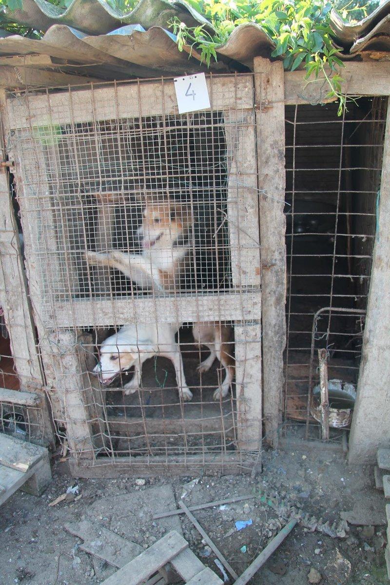 Bildertagebuch - Cuqui hat fast sein ganzes Leben im Hundelager verbracht und ist trotzdem ein freundlicher Hund...VERMITTELT! 33343659qd