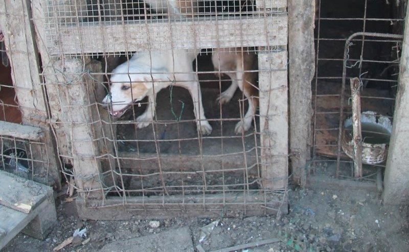 Bildertagebuch - Cuqui hat fast sein ganzes Leben im Hundelager verbracht und ist trotzdem ein freundlicher Hund...VERMITTELT! 33343660jz