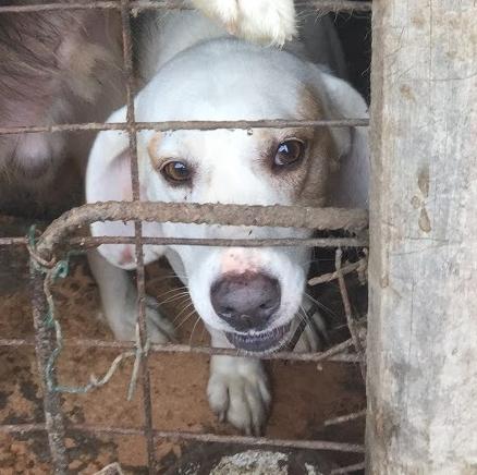 Bildertagebuch - Cuqui hat fast sein ganzes Leben im Hundelager verbracht und ist trotzdem ein freundlicher Hund...VERMITTELT! 33343662ix
