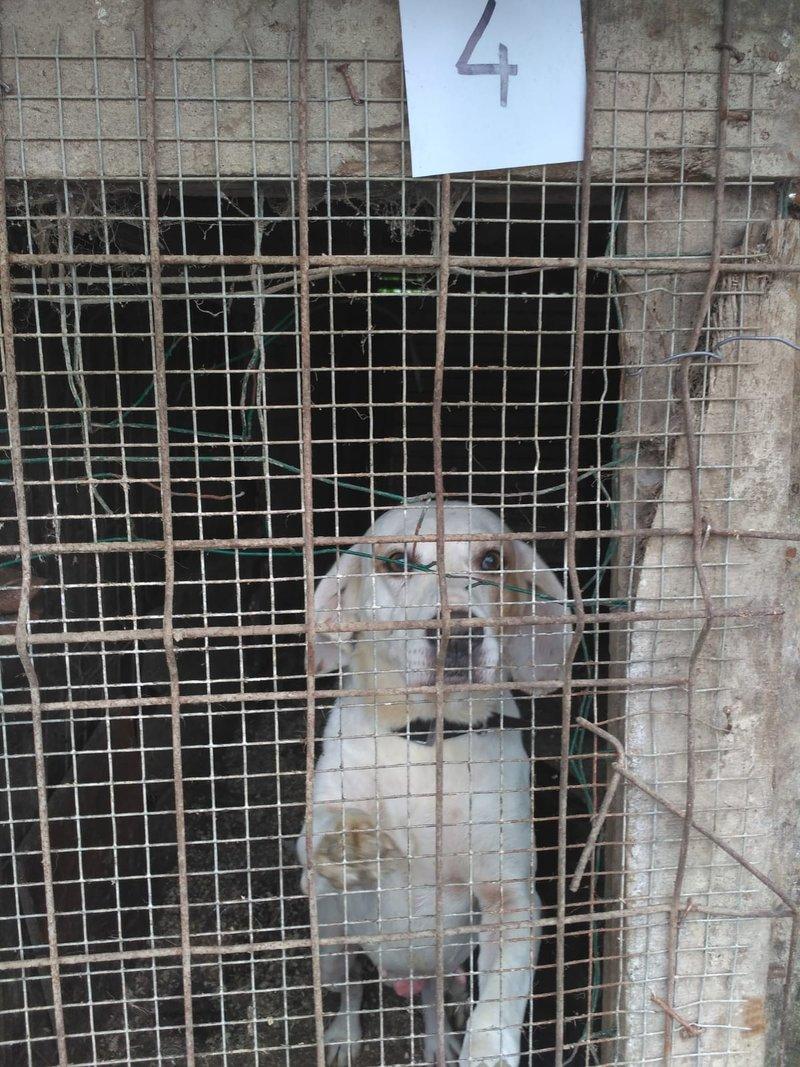 Bildertagebuch - Cuqui hat fast sein ganzes Leben im Hundelager verbracht und ist trotzdem ein freundlicher Hund...VERMITTELT! 33343663sq