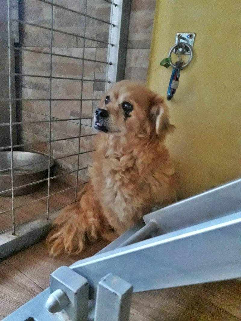 Bildertagebuch - Canela und Canelo...zwei kleine Hundeschätzchen suchen Päppelplatz...VERMITTELT! 33345351ih