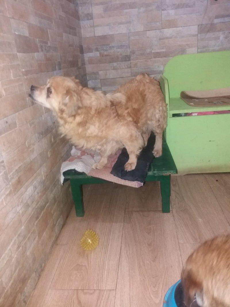 Bildertagebuch - Canela und Canelo...zwei kleine Hundeschätzchen suchen Päppelplatz...VERMITTELT! 33345353ws