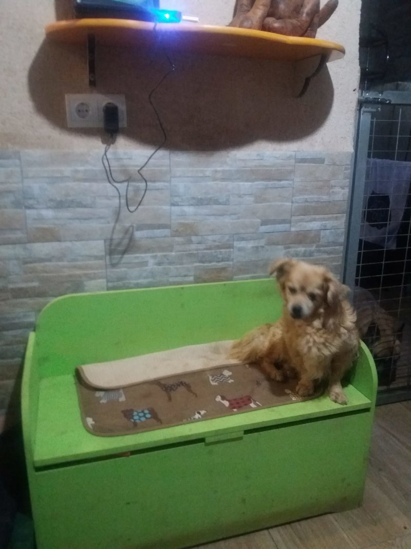 Bildertagebuch - Canela und Canelo...zwei kleine Hundeschätzchen suchen Päppelplatz...VERMITTELT! 33345355eh