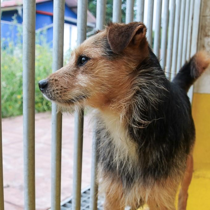 Bildertagebuch - Risto, ein junger, quirliger Foxterriermix möchte das Leben kennen lernen...VERMITTELT! 33346673nq
