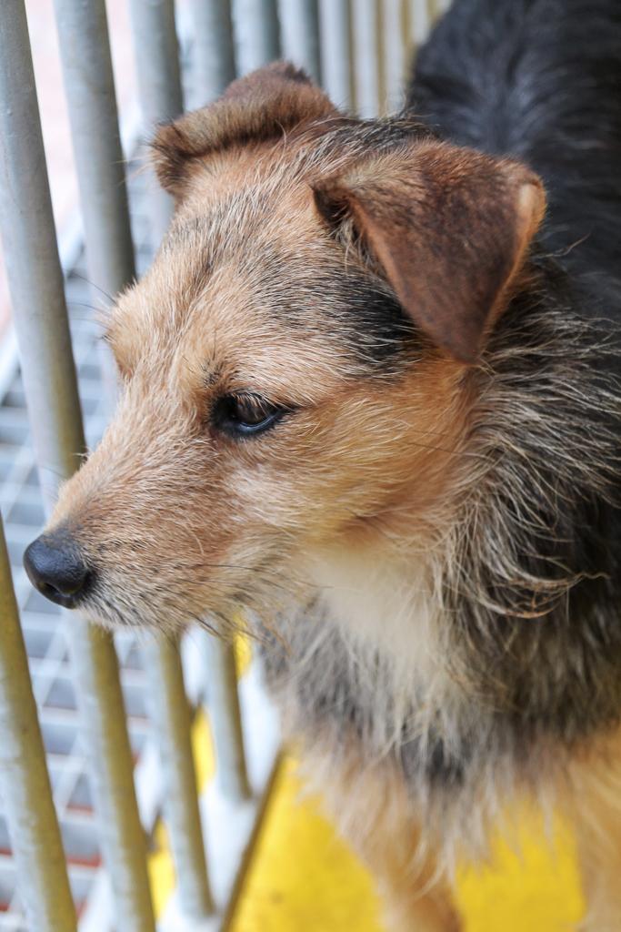 Bildertagebuch - Risto, ein junger, quirliger Foxterriermix möchte das Leben kennen lernen...VERMITTELT! 33346676ny