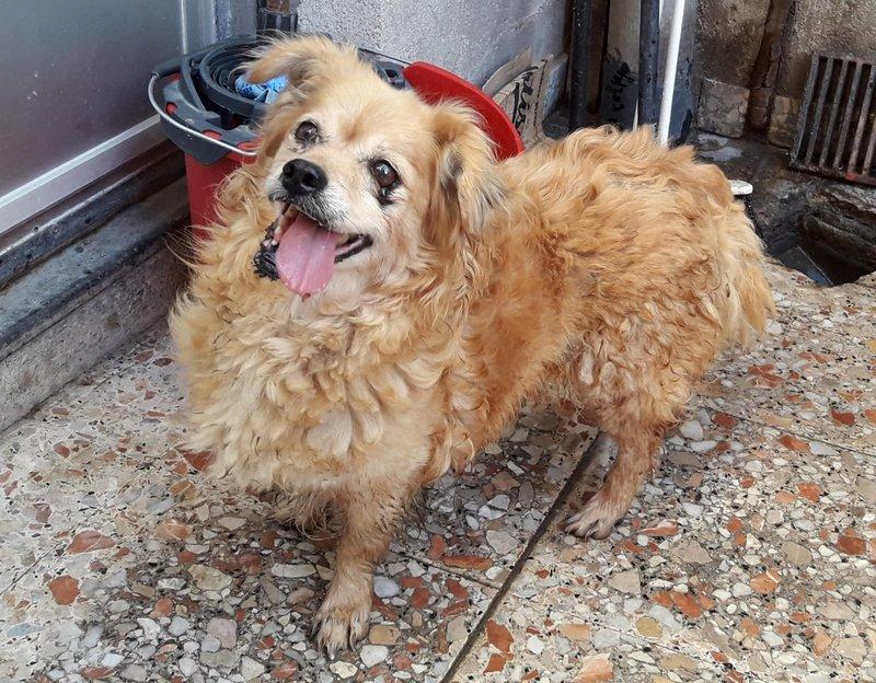 Bildertagebuch - Canela und Canelo...zwei kleine Hundeschätzchen suchen Päppelplatz...VERMITTELT! 33382567dw