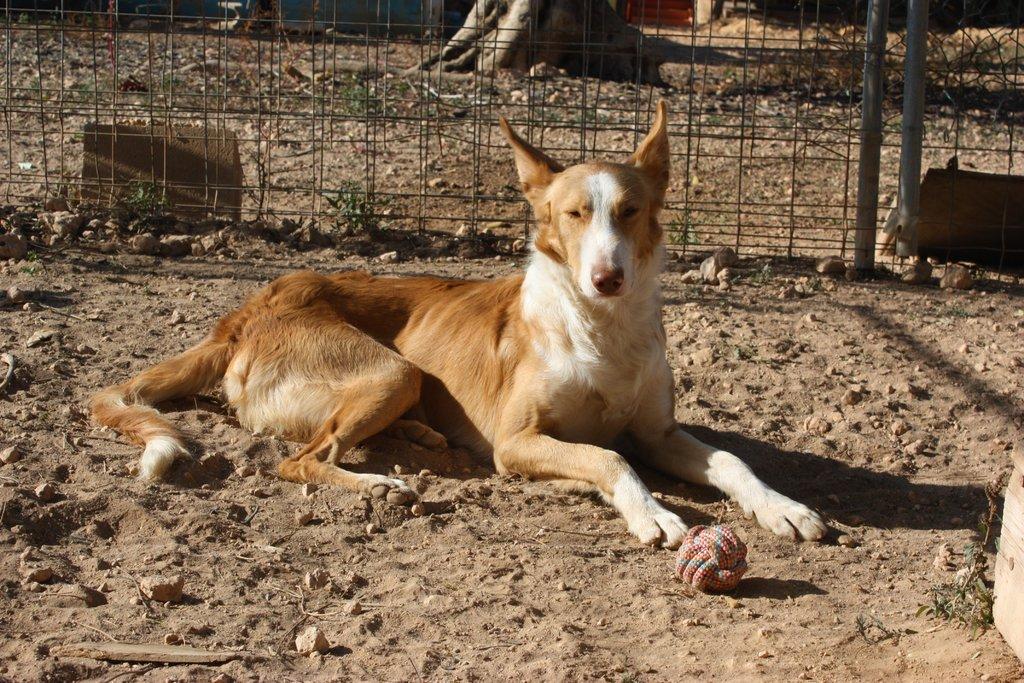 Bildertagebuch - TRECE, ein Traumhund - VERMITTELT - 33591731zy