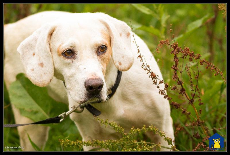 Bildertagebuch - Cuqui hat fast sein ganzes Leben im Hundelager verbracht und ist trotzdem ein freundlicher Hund...VERMITTELT! 33664746yb
