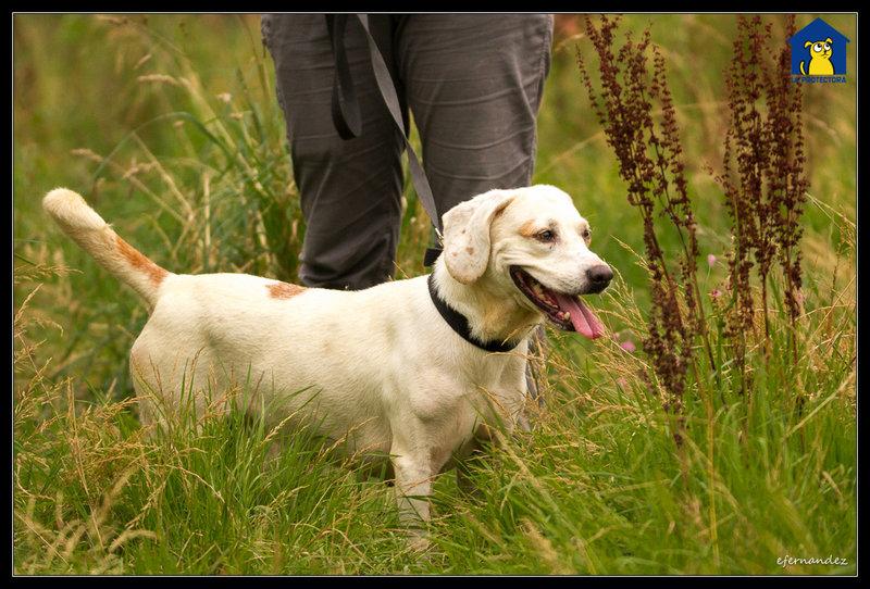 Bildertagebuch - Cuqui hat fast sein ganzes Leben im Hundelager verbracht und ist trotzdem ein freundlicher Hund...VERMITTELT! 33664747gw