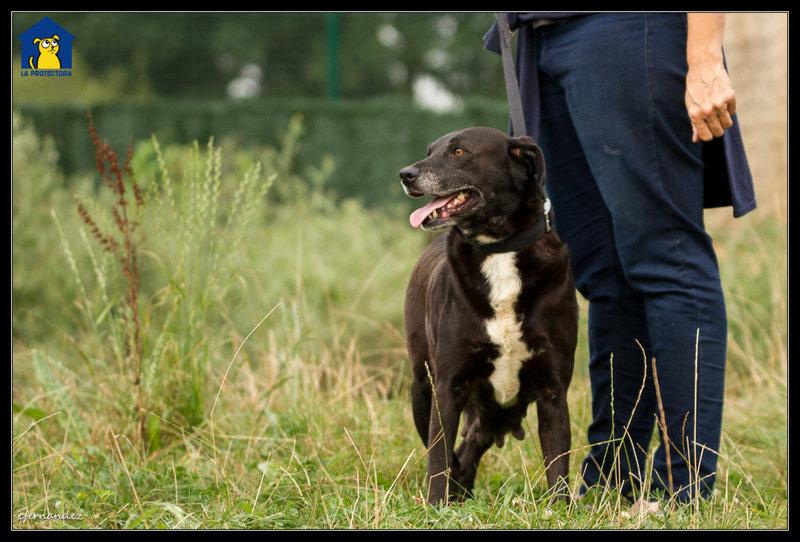 Bildertagebuch - Tuna, eine ältere Hundelady wünscht sich ein endgültiges Zuhause - VERMITTELT - 33672381zy