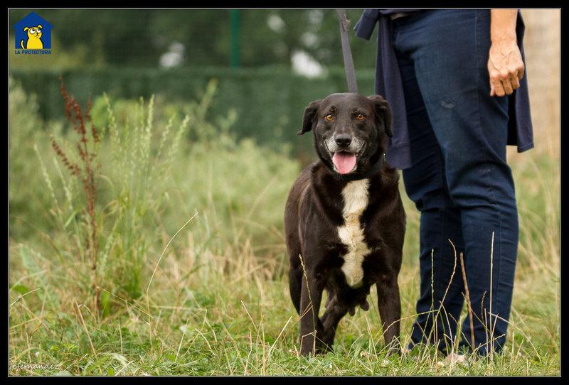 Bildertagebuch - Tuna, eine ältere Hundelady wünscht sich ein endgültiges Zuhause - VERMITTELT - 33672383lo