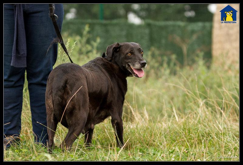 Bildertagebuch - Tuna, eine ältere Hundelady wünscht sich ein endgültiges Zuhause - VERMITTELT - 33672384gq