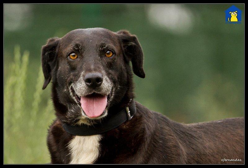 Bildertagebuch - Tuna, eine ältere Hundelady wünscht sich ein endgültiges Zuhause - VERMITTELT - 33672387sr