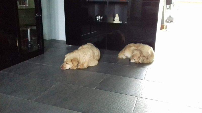 Bildertagebuch - Canela und Canelo...zwei kleine Hundeschätzchen suchen Päppelplatz...VERMITTELT! 33895394ew