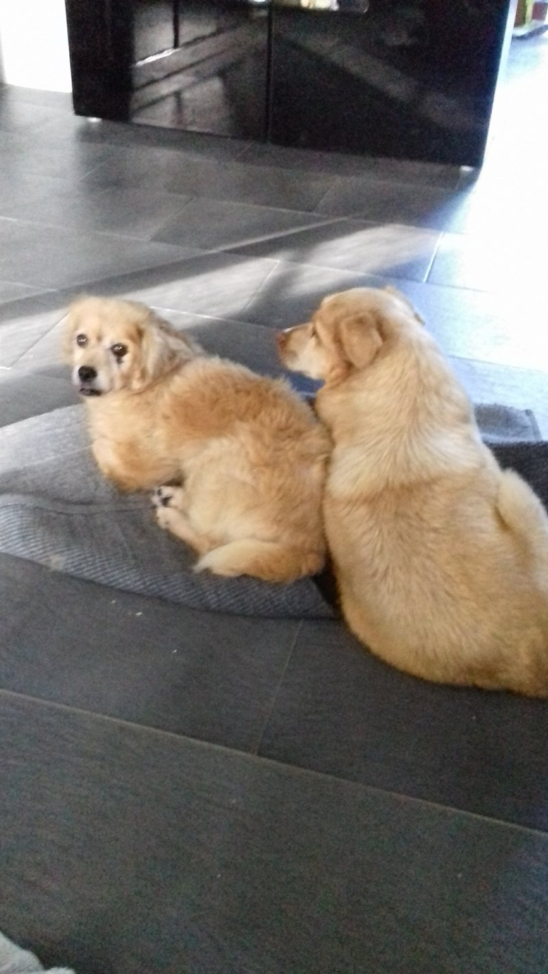 Bildertagebuch - Canela und Canelo...zwei kleine Hundeschätzchen suchen Päppelplatz...VERMITTELT! 33895396mz