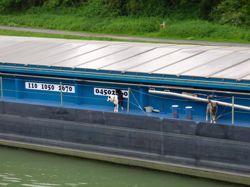 Kleiner Rheinbummel in Duisburg-Ruhrort und Umgebung - Sammelbeitrag - Seite 7 33963767vx