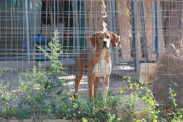 Bildertagebuch - UNDO, er wurde einfach am Zaun angebunden - VERMITTELT - 34089293hc