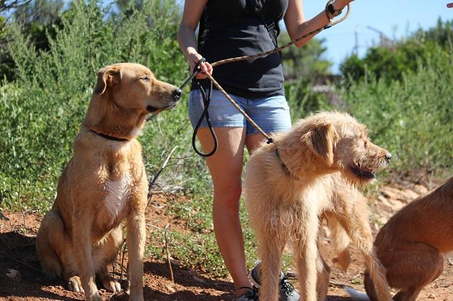 Bildertagebuch - Agora, ein ehemaliger Straßenhund sucht ihr Zuhause - VERMITTELT! 34148690bs