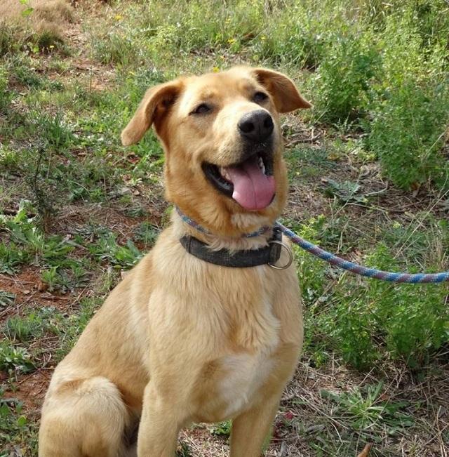 Bildertagebuch - Agora, ein ehemaliger Straßenhund sucht ihr Zuhause - VERMITTELT! 34148691lf
