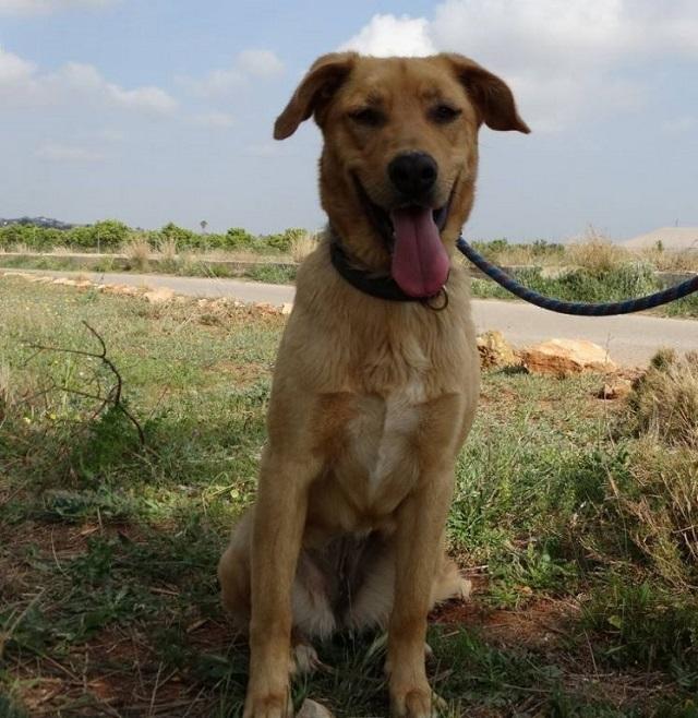 Bildertagebuch - Agora, ein ehemaliger Straßenhund sucht ihr Zuhause - VERMITTELT! 34148693mb