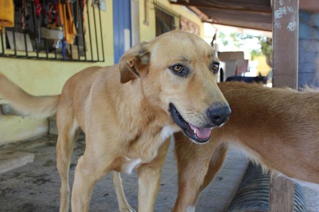 Bildertagebuch - Agora, ein ehemaliger Straßenhund sucht ihr Zuhause - VERMITTELT! 34148698sk